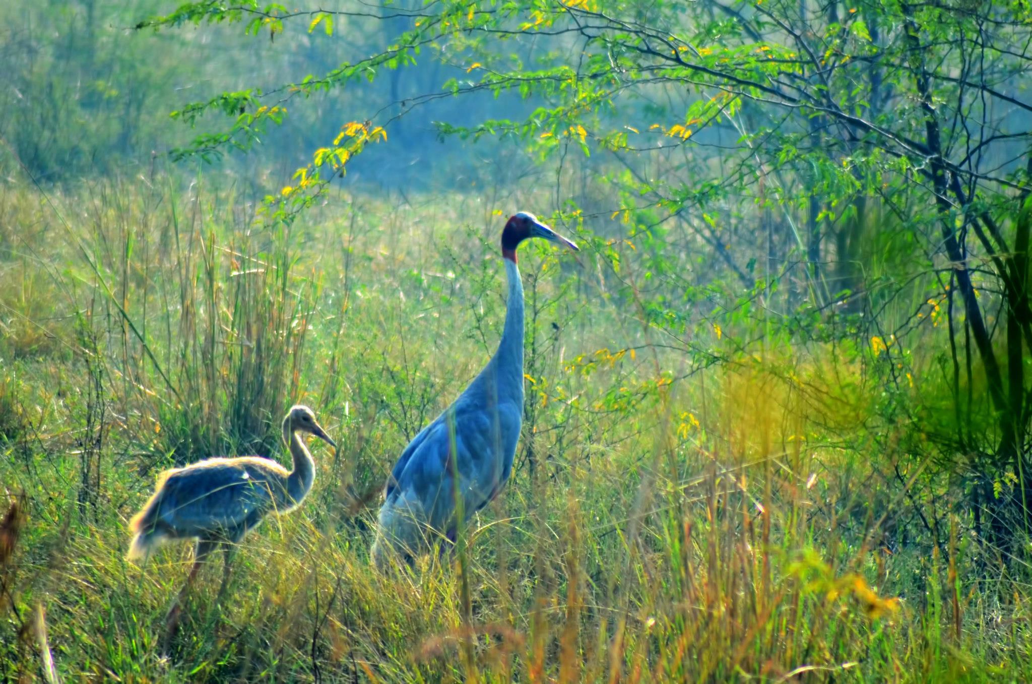 wildlife at Bharatpur wildlife sanctuary