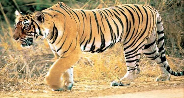 rajasthan wildlife tourism